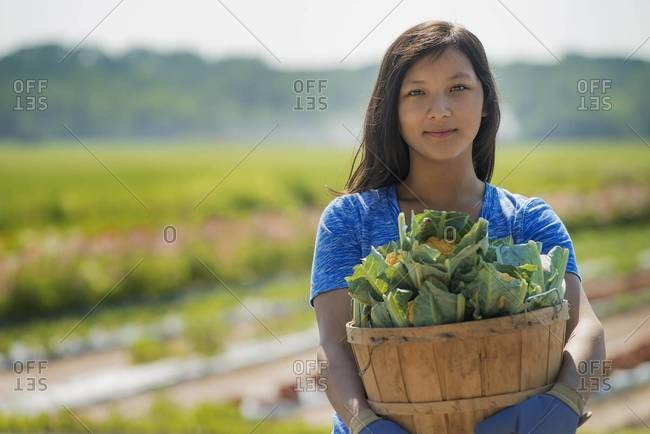 Young woman in field of produce, market garden of fresh vegetables, holding basket of fresh produce