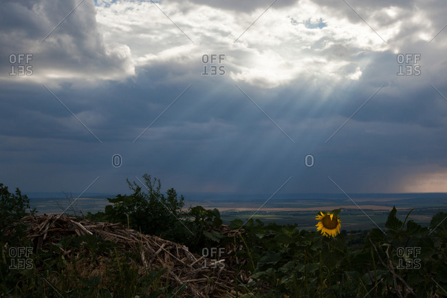 The sun shines on a sunflower in Moldova\'s first national park