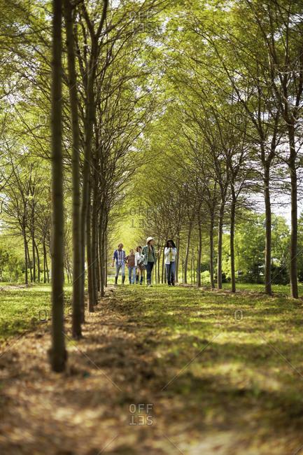 Friends walking down an avenue of trees
