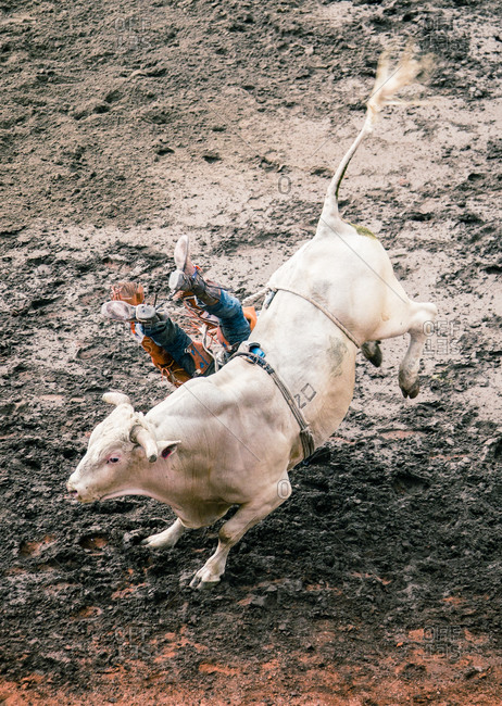 High angle view of a cowboy falling off a bucking bull