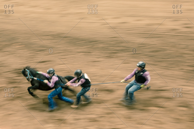 Contestants trying to break in a bronco horse