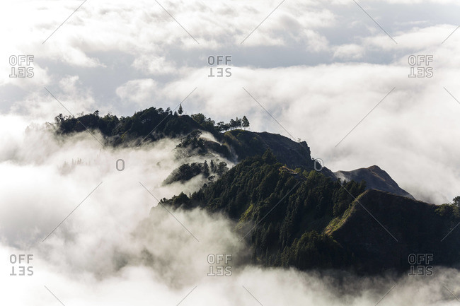 Trees above the clouds, Santo Antao, Cape Verde