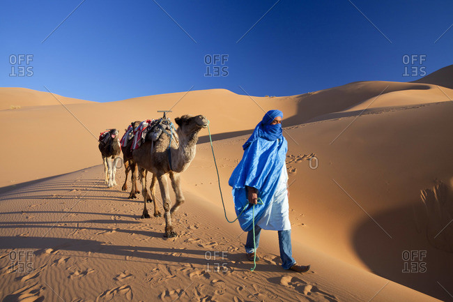 Tuareg man with camel train, Erg Chebbi, Sahara Desert, Morocco