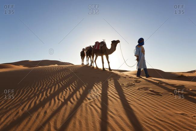 Tuareg man with camel train, Erg Chebbi, Sahara Desert, Morocco