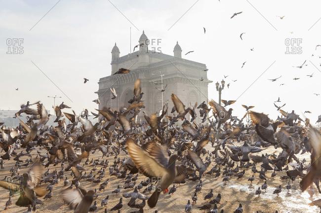 Pigeons, India Gate, Colaba, Mumbai (Bombay), India