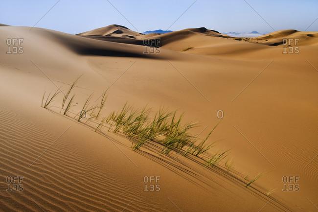 Grasses in sand dunes - Offset