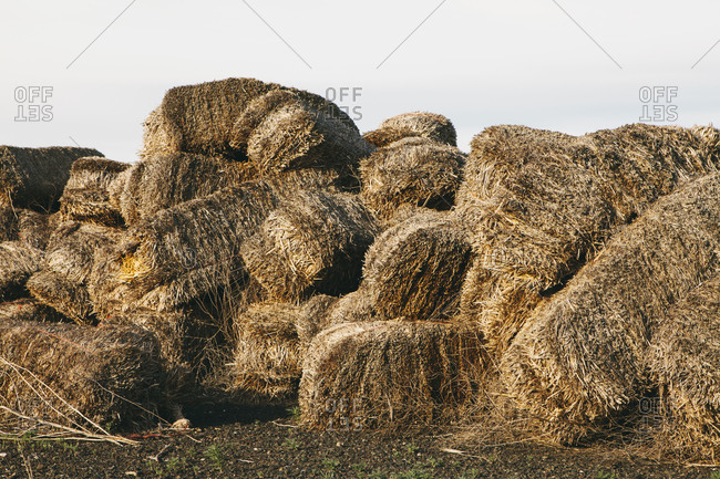 Straw bales in a heap rotting with age and damp