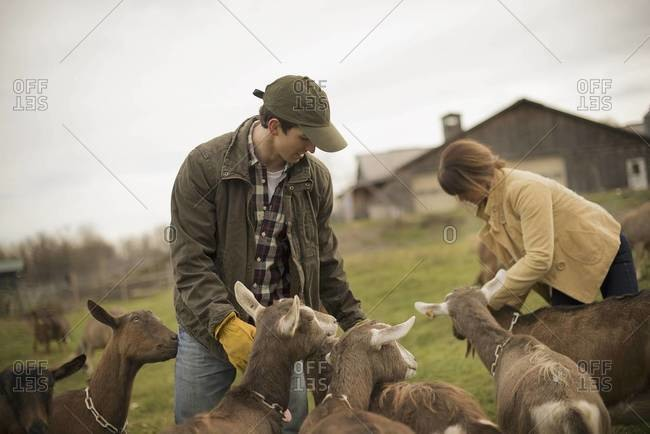 Farmer working and tending to the animals.