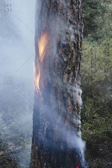 A controlled forest burn, a deliberate fire set to create a healthier and more sustainable forest ecosystem.
