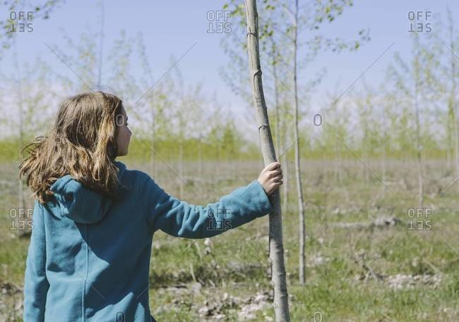 Ten year old girl standing next to commercially grown poplar tree on large tree farm, near Pendleton, Oregon.