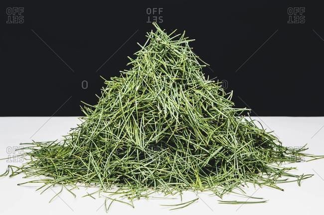 Pile of green pine needles (Shore pine), close up