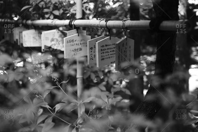Ema tablets at Hikawa Shrine, Tokyo