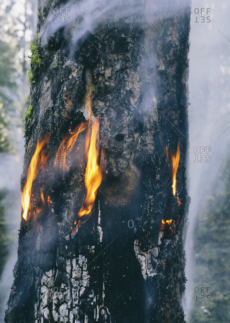 A controlled forest burn, a deliberate fire set to create a healthier and more sustainable forest ecosystem