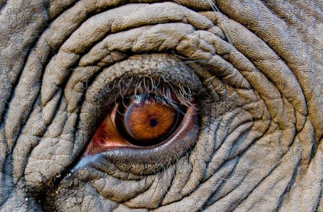 Elephant eye from the Offset Collection
