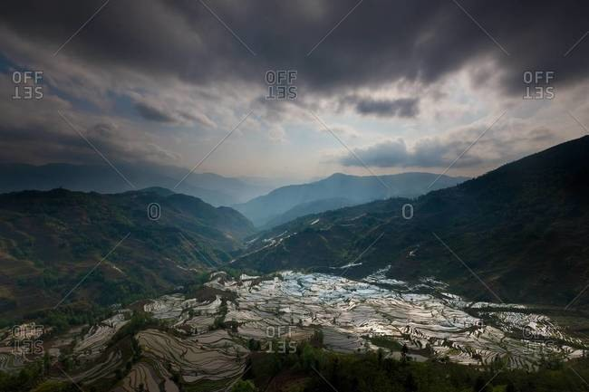 Expansive terraced rice fields