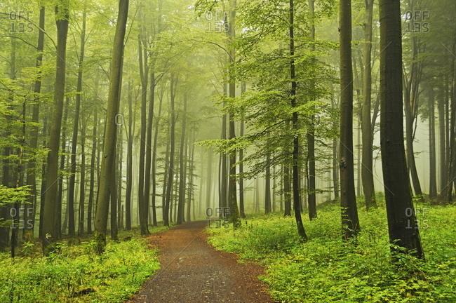 Morning fog in forest near