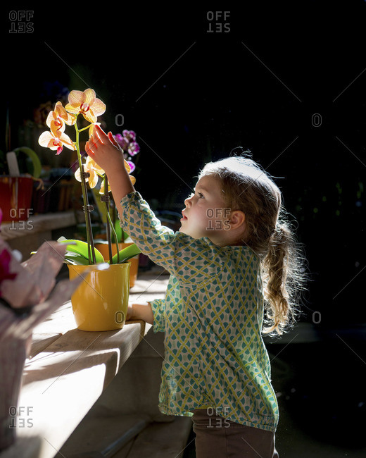 Curious girl touching an orchid