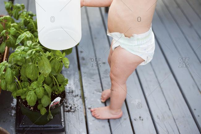 Toddler watering basil outdoor