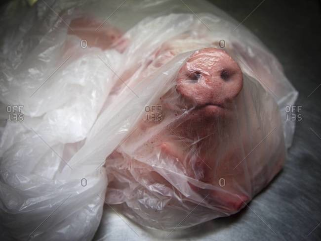 A packaged butchered pig's head