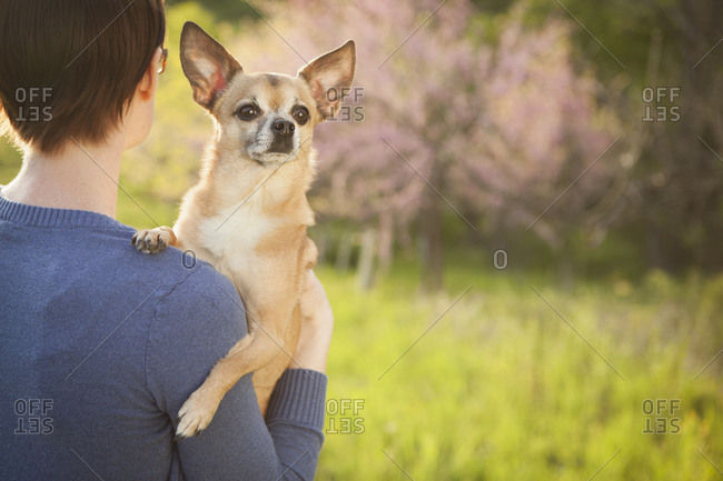 Woman with Chihuahua over her shoulder