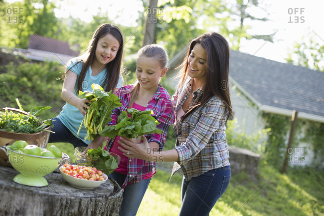 Two young girls and a young adult preparing salad leaves for a buffet