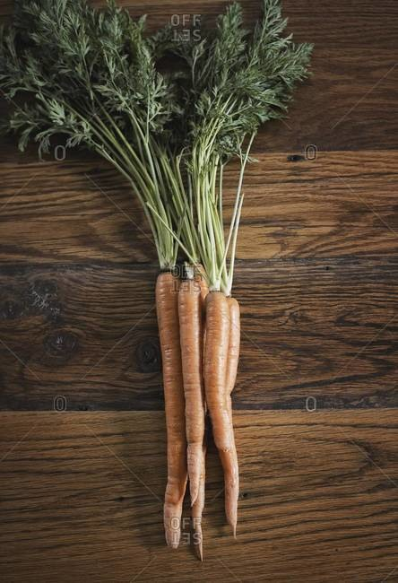 A small bunch of carrots with green leafy tops freshly harvested, lying on a tabletop