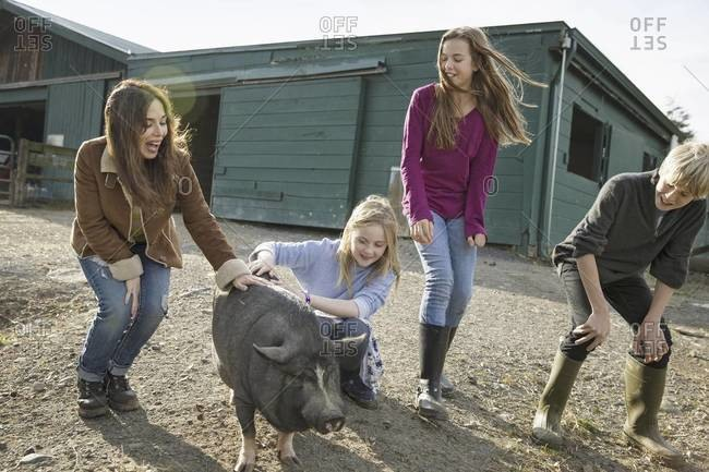 Three children and a young woman with a large pig, in the pigpen at an animal sanctuary