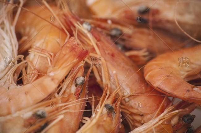 A dish of freshly cooked prawns with shells, heads and tails on
