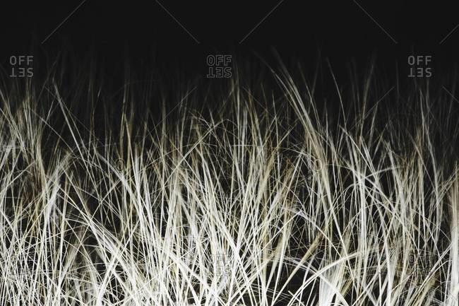 Field of sea grasses, night
