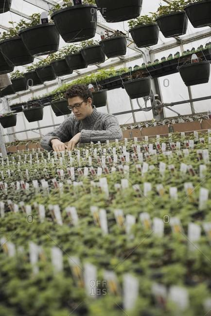 A man checking rows of seedlings and young plants