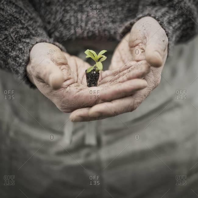 A man holding a handful of plant seeds