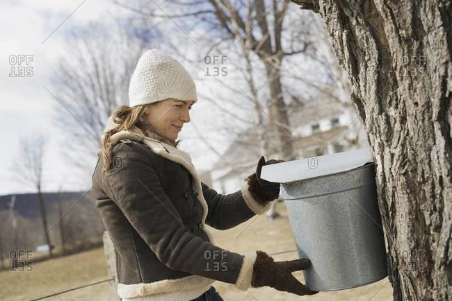 A young woman holding a bucket which is tapping the sap from the tree