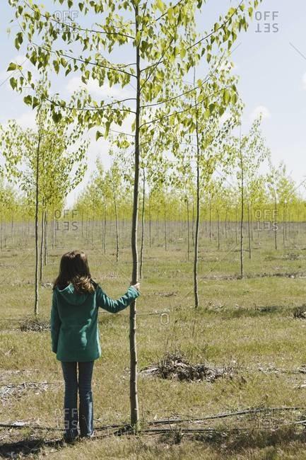 Ten year old girl standing next to commercially grown poplar tree on large tree farm, near Pendleton, Oregon