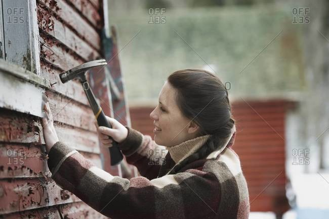 A woman with a hammer repairing the shingles on a barn