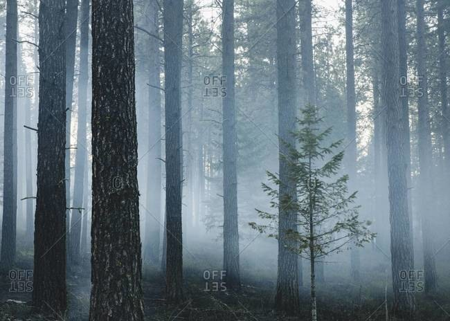 a deliberate fire set to create a healthier and more sustainable forest ecosystem