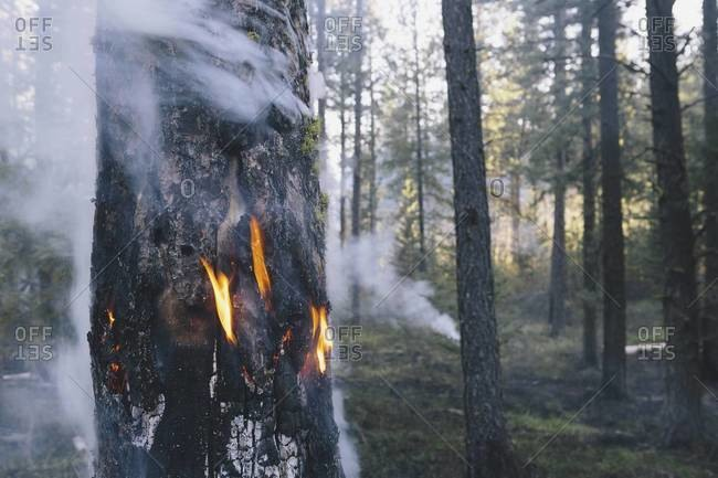 A deliberate fire set to create the right condition for regrowth