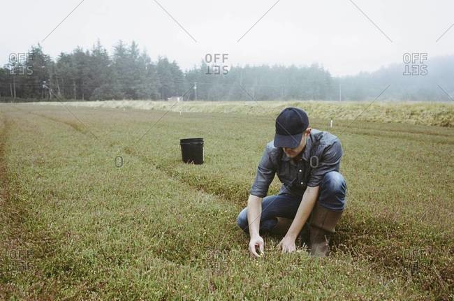 A young man working on the land, harvesting the crop