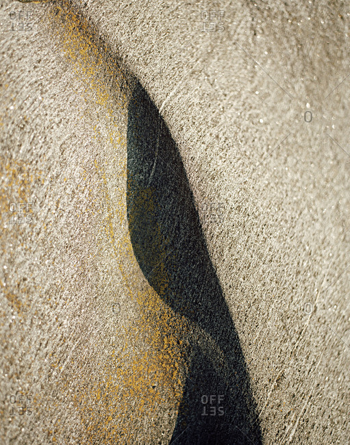 Close up of the surface of a rock