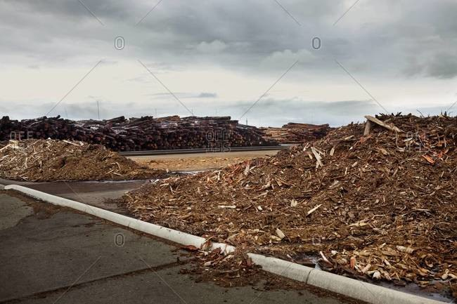 Stacked logs and waste on timber yard