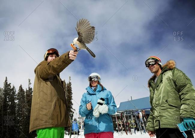 Bird grabbing some bread out of skier's hand