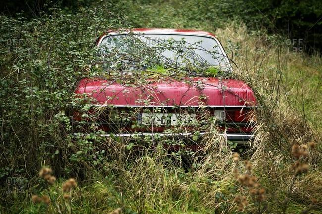 Rear view of an overgrown red car