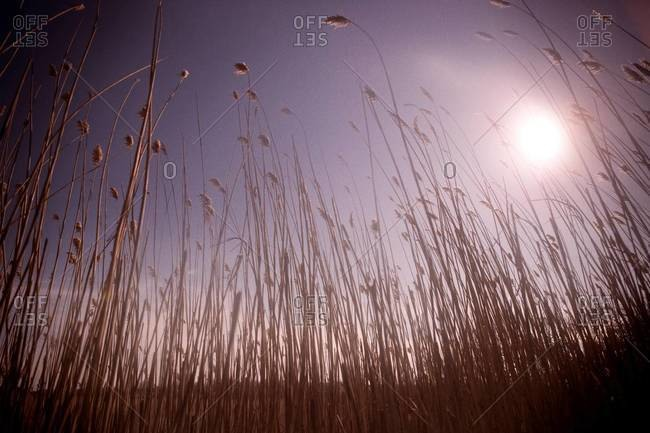 Low angle view of stems of grass