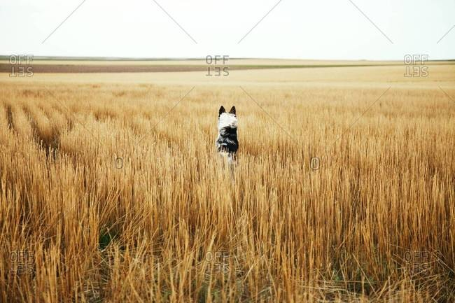 Dog sitting at a field