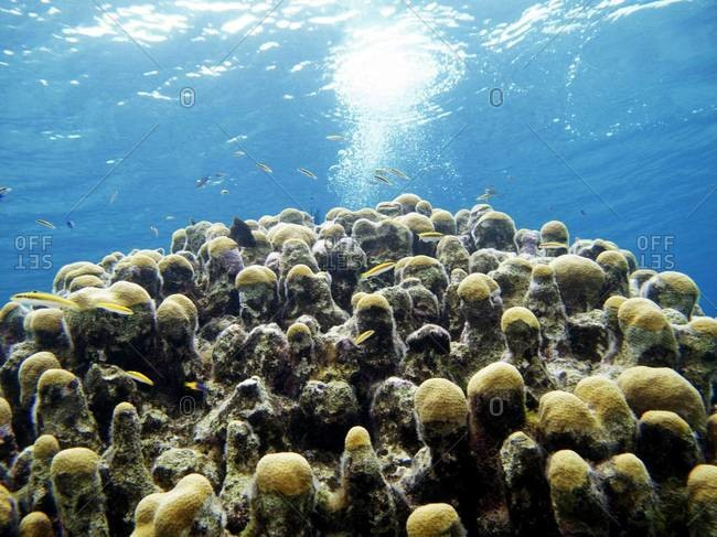 Fish swimming around a coral reef