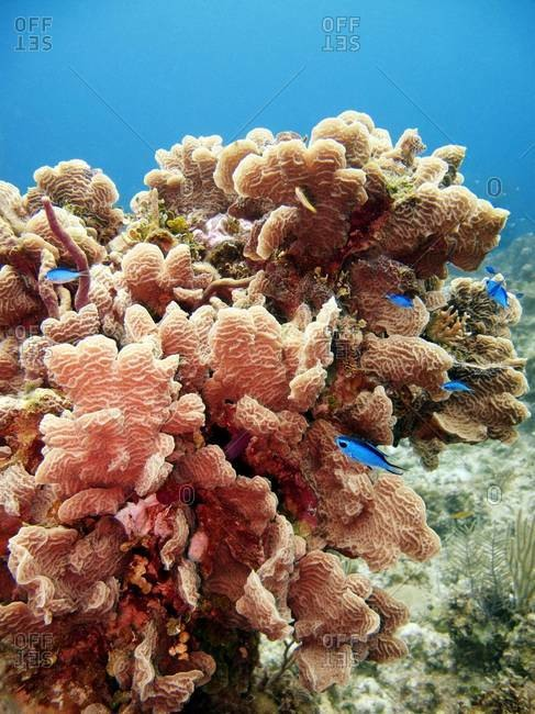 Coral reef surrounded by fish