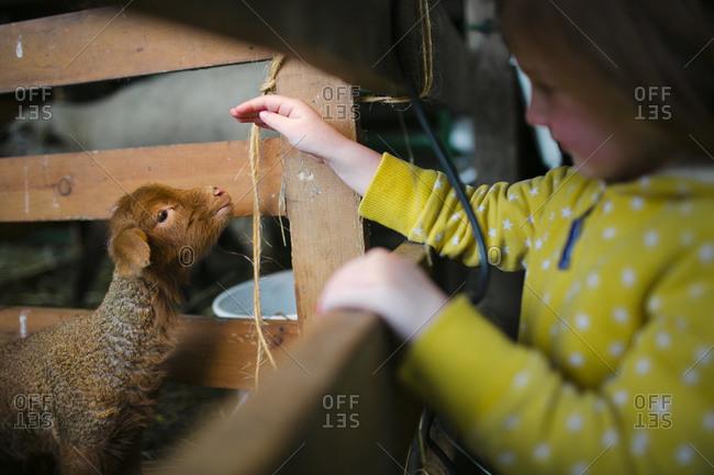 Young girl petting lamb on farm