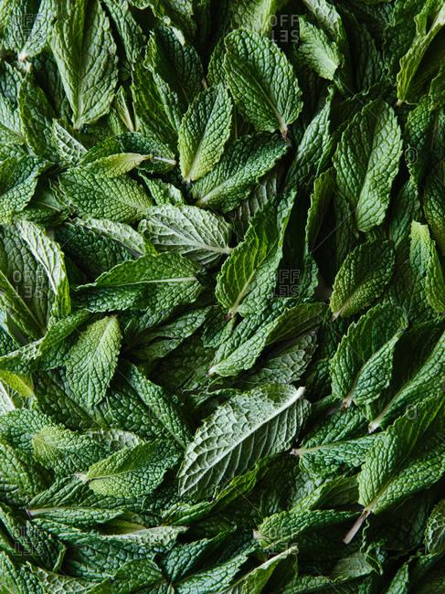 Mint leaves arranged as full frame background