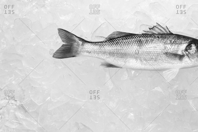 Top view of sea bass on ice