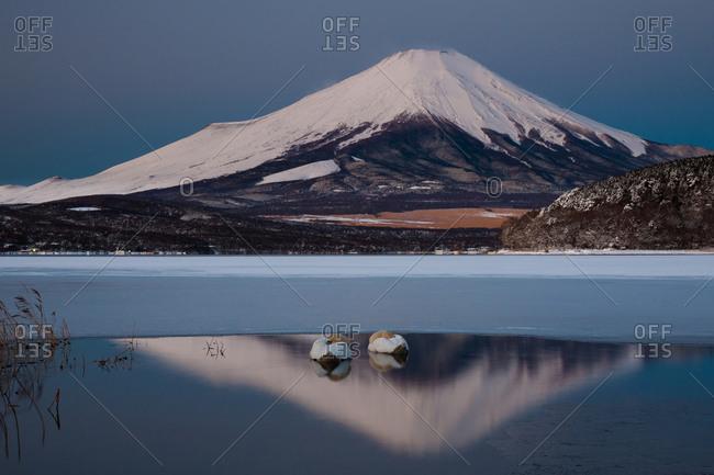 Two mute swans in Lake Kawaguchi in the reflection of Mt. Fuji, Japan