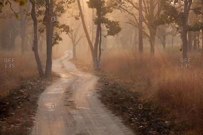 Bandhavgarh National Park, India - Offset